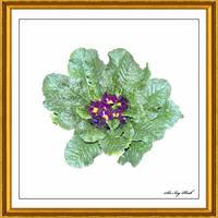 Flower Art 2438 2AC by SirIvyPink