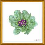 Flower Art 2438 2AC