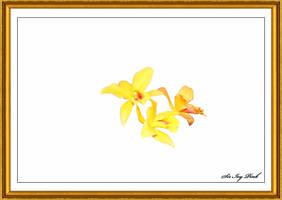 Flower Art 2464 2AC by SirIvyPink