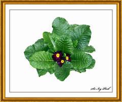 Flower Art 2439 3AAC by SirIvyPink