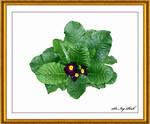 Flower Art 2439 3AAC