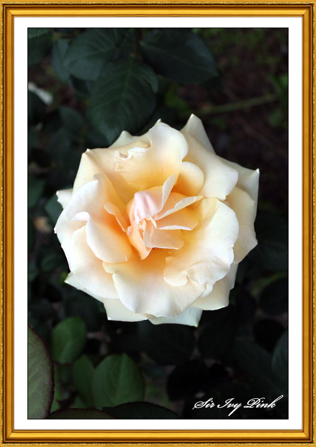 Flower 2947 ACDE by SirIvyPink