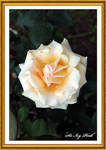 Flower 2947 ACDE