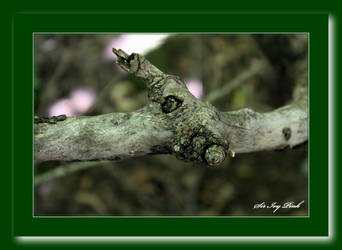 Old Tree Branch Art 3688 AA by SirIvyPink