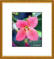 A Lot Of Spots On A  Flower Art 3723 1A by SirIvyPink