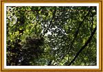 Trees Art 3704 1A
