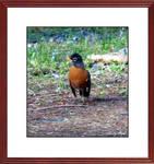 Bird Art 2646 (8)