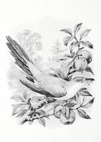 New England Birds   Cuckoo By Yesterdays Paper-dbj by SirIvyPink