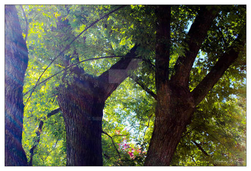 Tree In The Front Yard (6505)