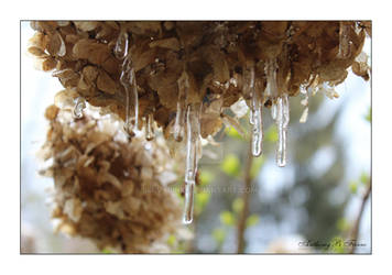 Snow And Ice 04-22-2021 (4)