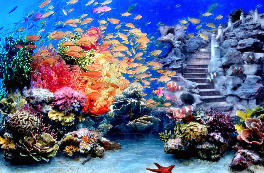 Undersea Stair 245463855