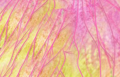Texture Butterflyx 1 by LuisFrelis