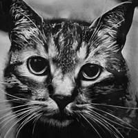 Kitty - Pencil