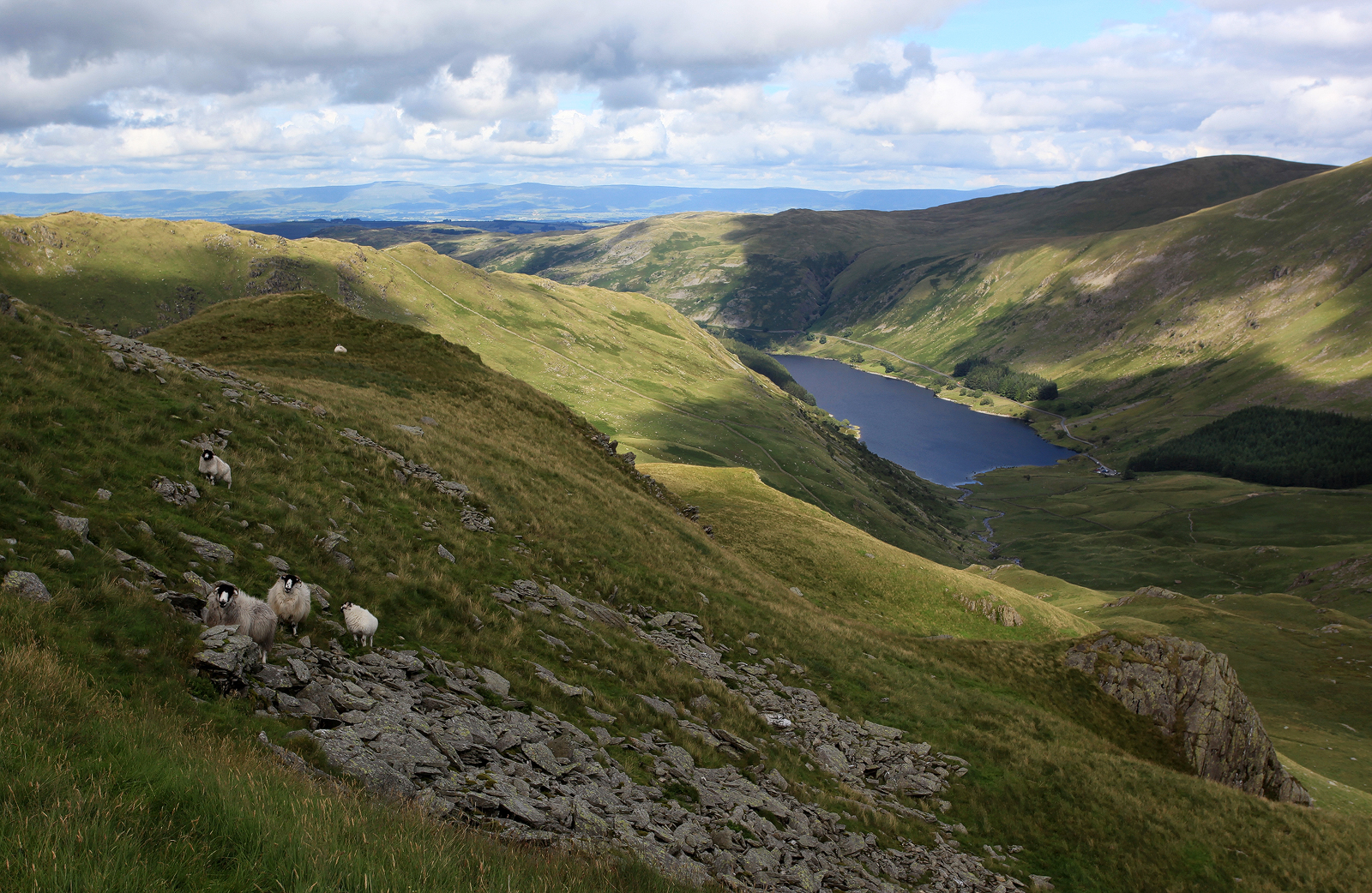 Mardale Sheep by danUK86