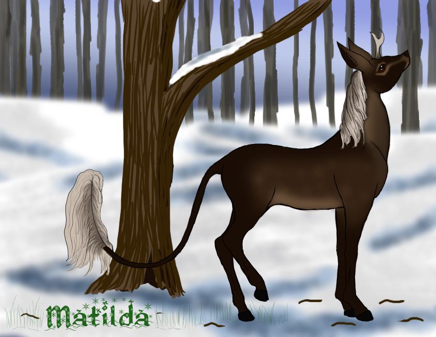 Matilda | Doe | Glenmore Royal by Zekmyr
