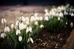 Spring's spirit