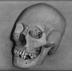 skull drawing by hg-art