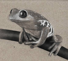 Frog Drawing by hg-art
