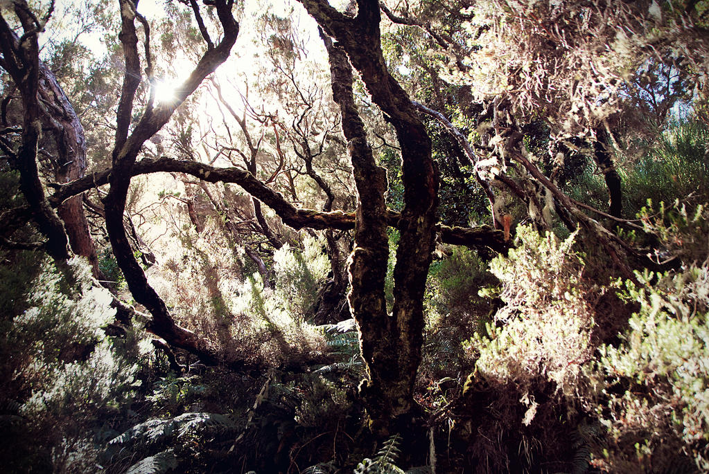 Pathless woods - Madeira by arsidoas