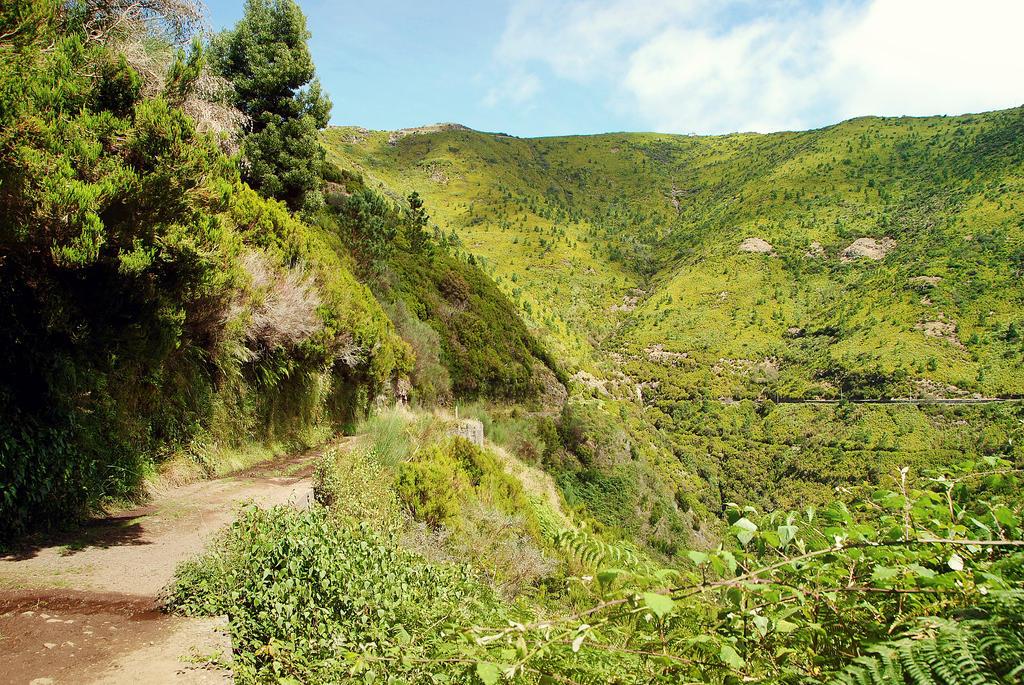 Green - Madeira by arsidoas