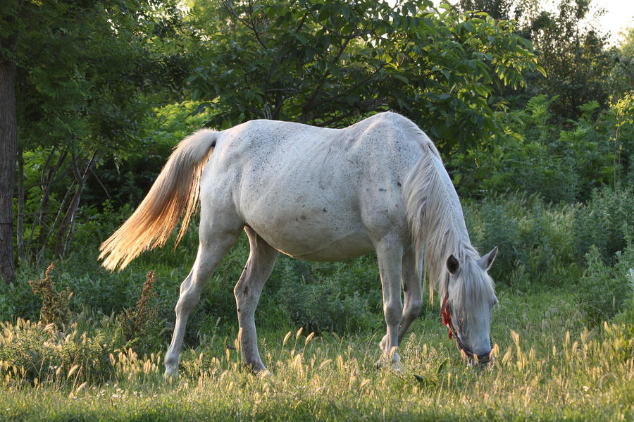 White horse by ddmkro