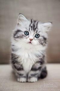 Kat-Cat33's Profile Picture