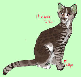 Chyr Cat Auction *CLOSED*