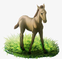 [F] Shy little foal by freyaswoman