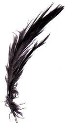 Feather 00024 by trug-bild