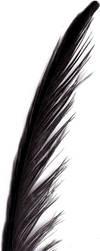 Feather 00029 by trug-bild