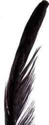 Feather 00030 by trug-bild
