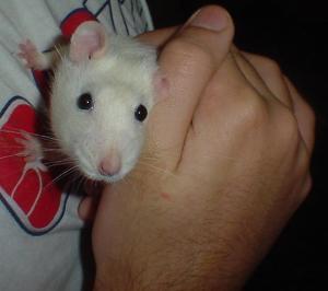 slidje's Profile Picture