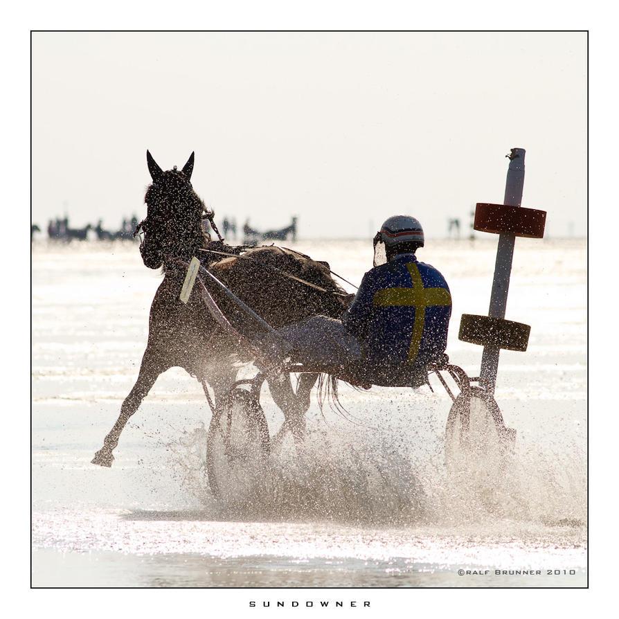 horse, horses, horse race, equ by RaMiBru