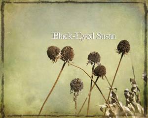 Black-Eyed Susan II