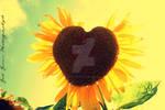 A Sunflower's Love by EricaCammer