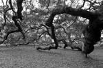 angel oak 4