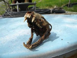 Dead Critter 02