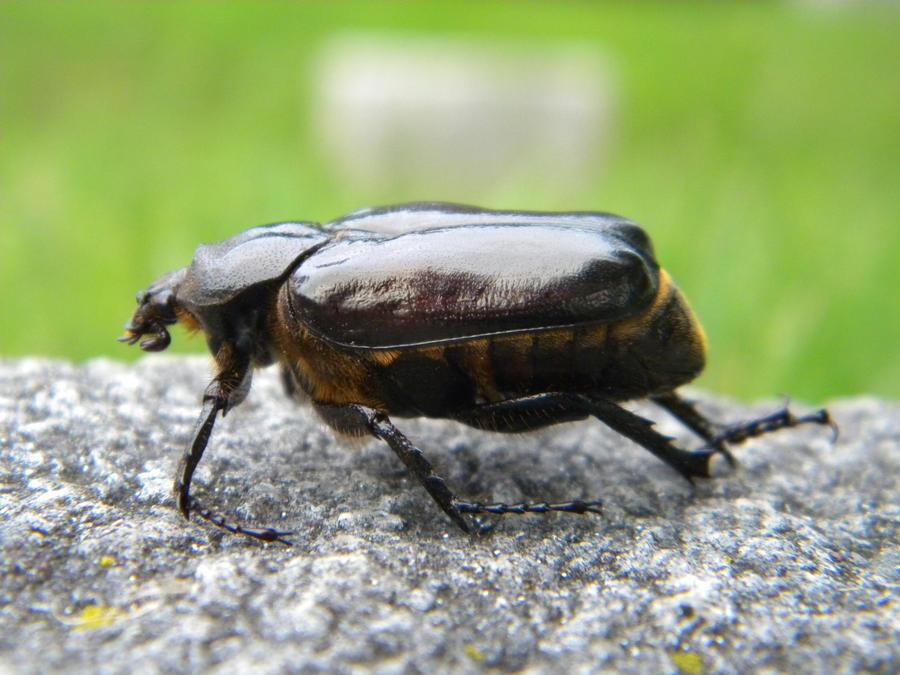 Beetle Bug 06 by Stock7000