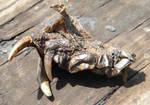 Dead Critter 52