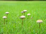 Mushroom Stock 24