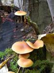 Mushroom 17