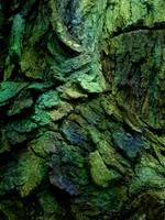Dragon's Bark 2 by Stock7000