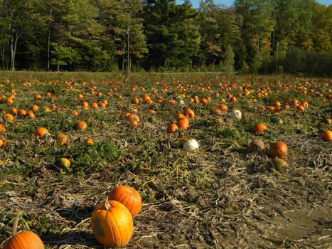Pumpkin Patch 001