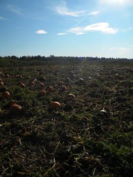Pumpkin Patch 002