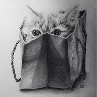 Cat in bag by annnelies