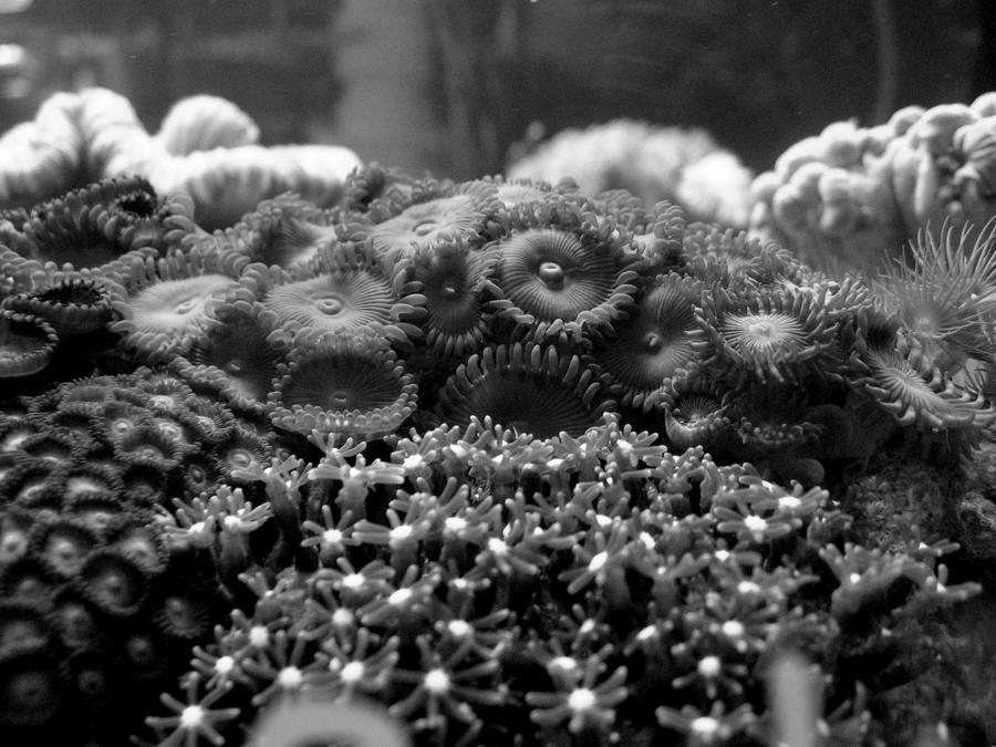 Coral 1 wallpaper > Coral 1 Papel de parede > Coral 1 Fondos