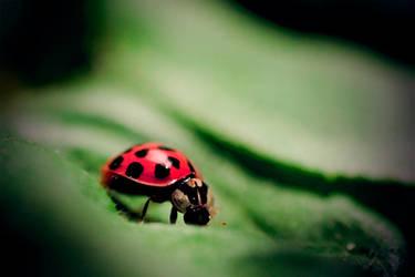 Ladybug by Arianezomg