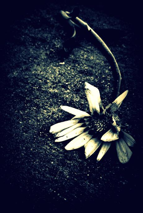 Dead Flower By XPeaceXLoveXRawrX