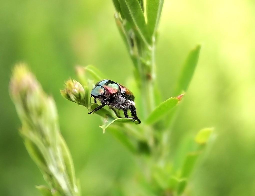 Bob Beetle by reedjones