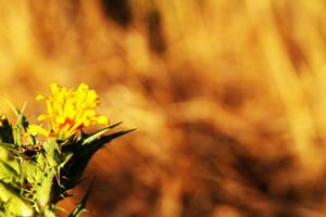 Country flower by Skillteo